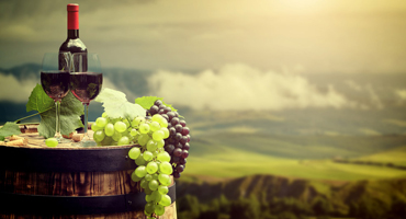 Winery Tours